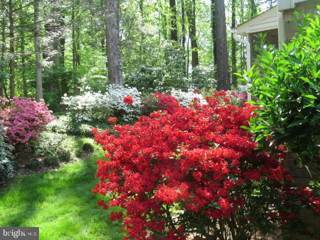 Springtime Garden  on Appleton View 7 - 8623 APPLETON CT, ANNANDALE