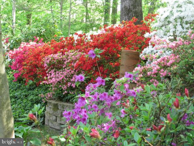 Springtime Garden  on Appleton View 2 - 8623 APPLETON CT, ANNANDALE