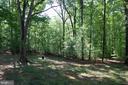 Wooded backyard - 21 CARDINAL DR, FREDERICKSBURG
