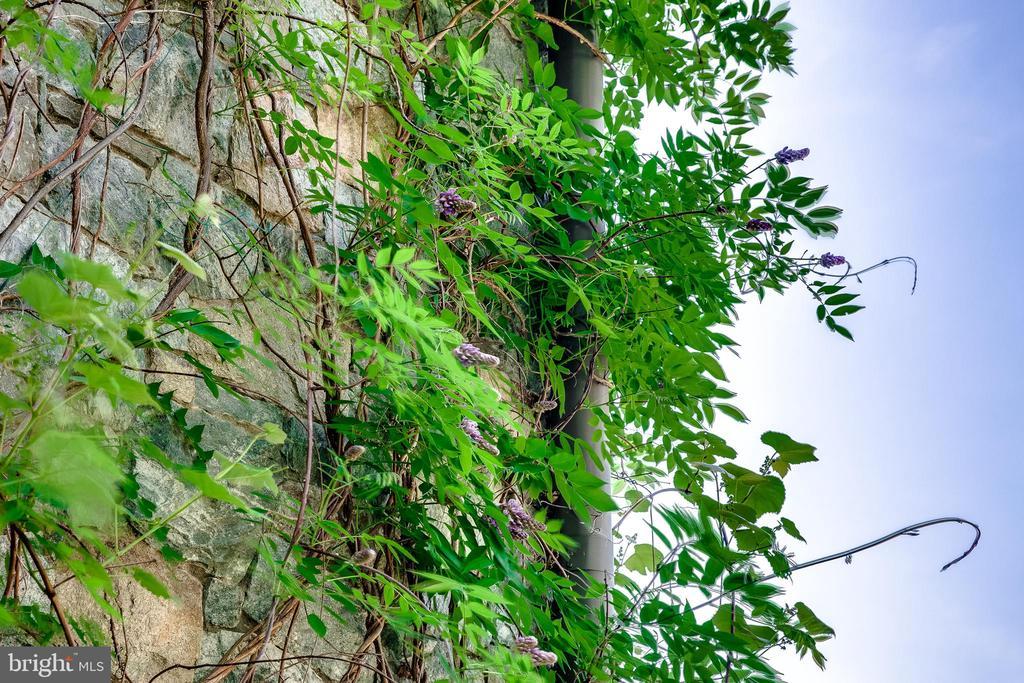 Grapes on the vine! - 11408 HIGHLAND FARM CT, POTOMAC