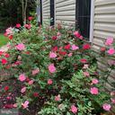 Beautiful seasonal blooms - 4112 FERRY LANDING RD, ALEXANDRIA