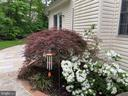 Gorgeous foliage all over the property - 4112 FERRY LANDING RD, ALEXANDRIA