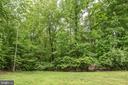 Beautiful tree line - 2843 GARRISONVILLE RD, STAFFORD