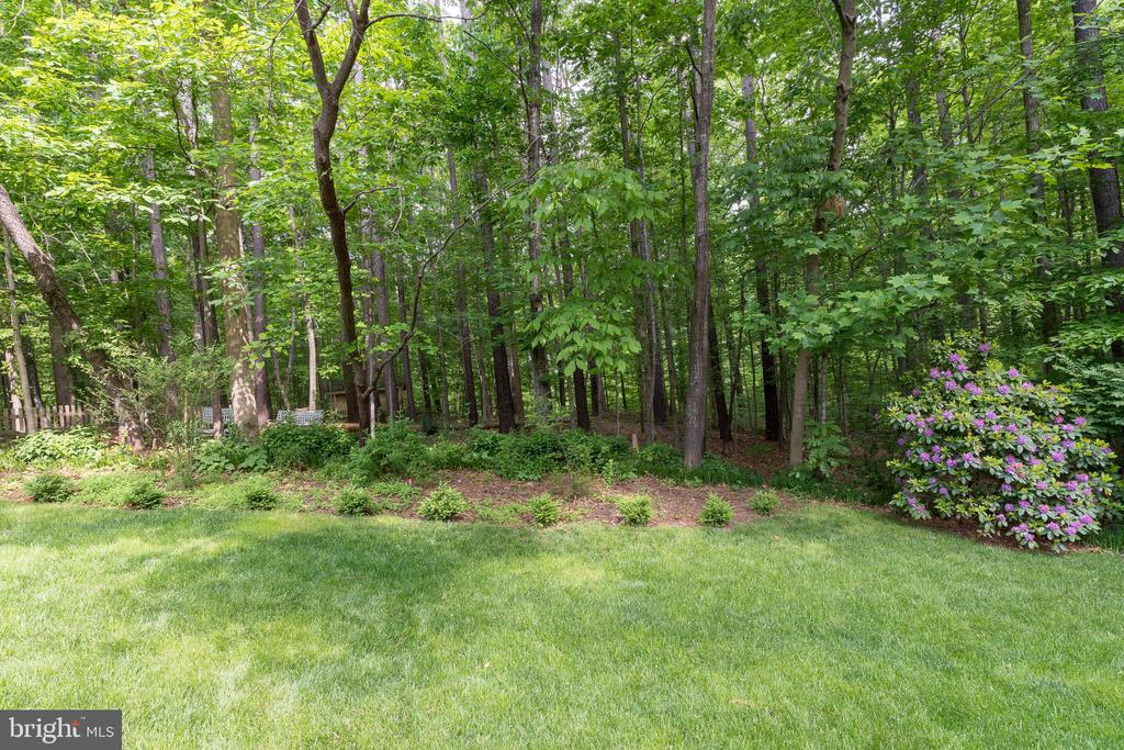 Your own forest steps away from the backdoor - 32 MONUMENT DR, STAFFORD