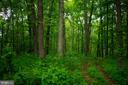 Lot has wooded areas and fields - 37354 JOHN MOSBY HWY, MIDDLEBURG