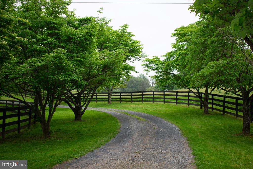 Lovely tree lined drive brings you back to home - 37354 JOHN MOSBY HWY, MIDDLEBURG
