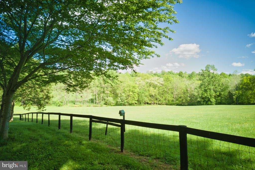 Glorious grass for your horses! - 23009 COBB HOUSE RD, MIDDLEBURG