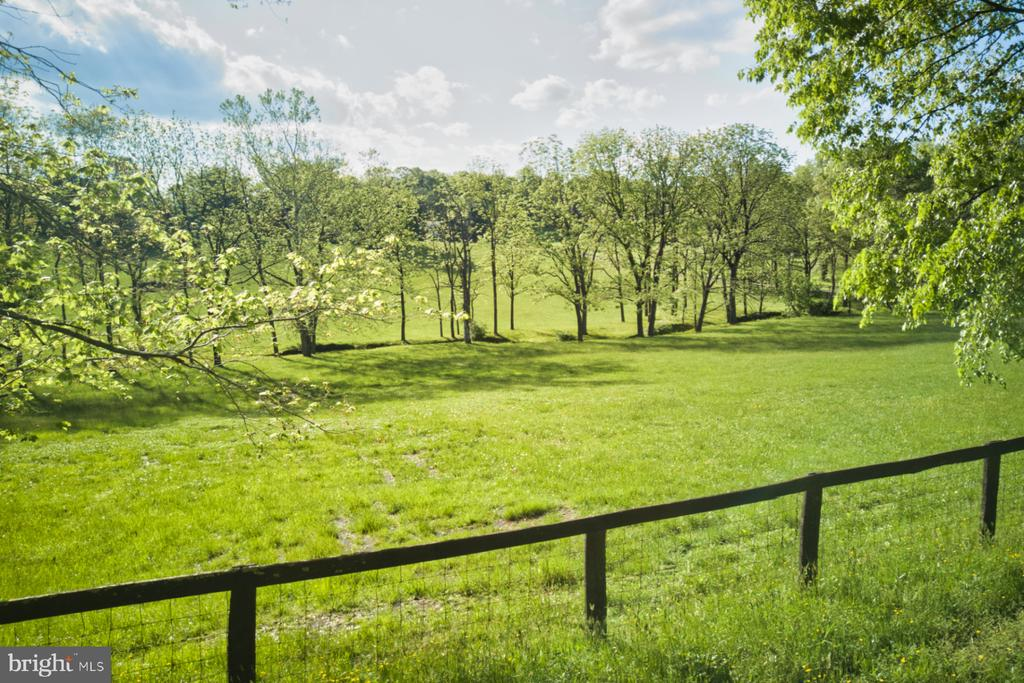A paradise for your animals! - 23009 COBB HOUSE RD, MIDDLEBURG