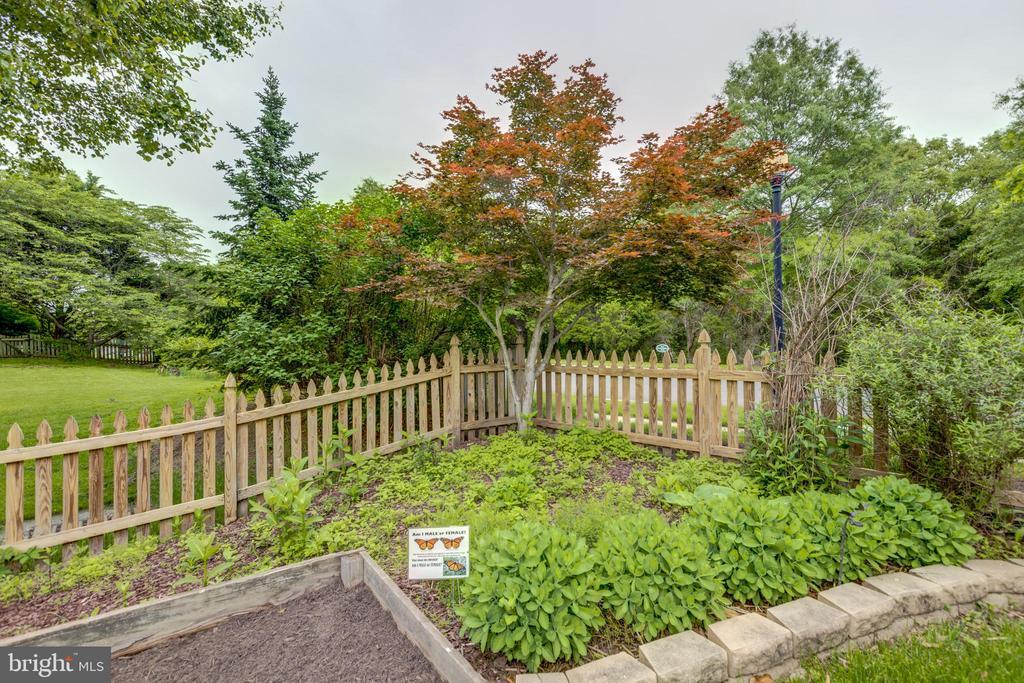 Monarch butterfly garden - 43262 TISBURY CT, CHANTILLY