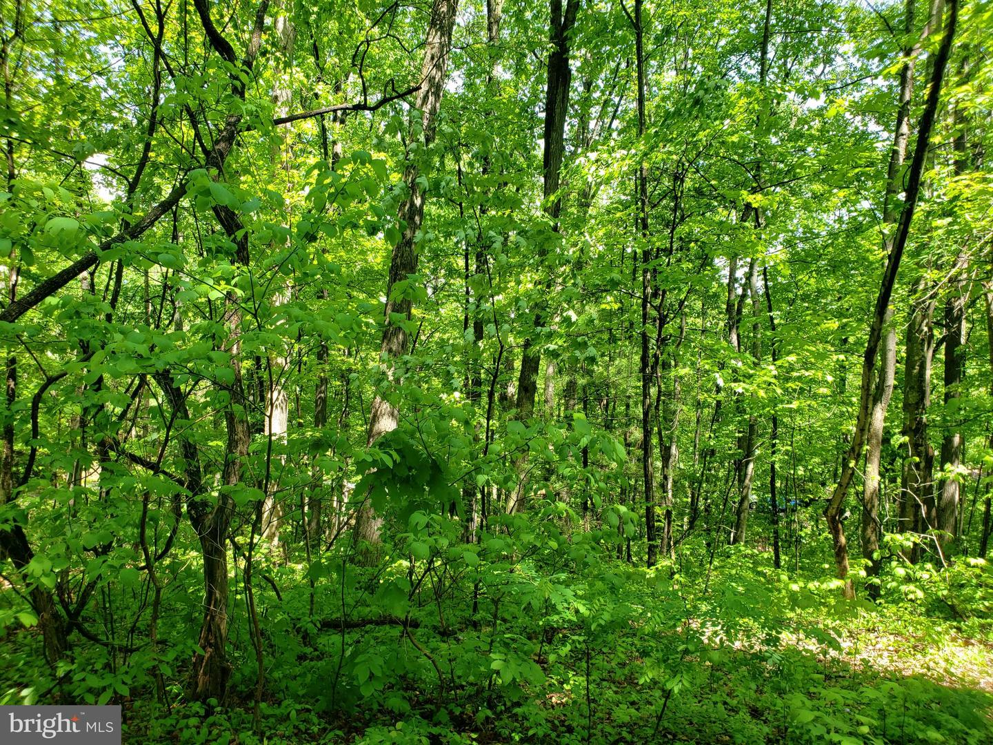 Land for Sale at 0 Lillards Road New Market, Virginia 22844 United States