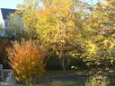 Deck view in the Fall - 10115 RATCLIFFE MANOR DR, FAIRFAX