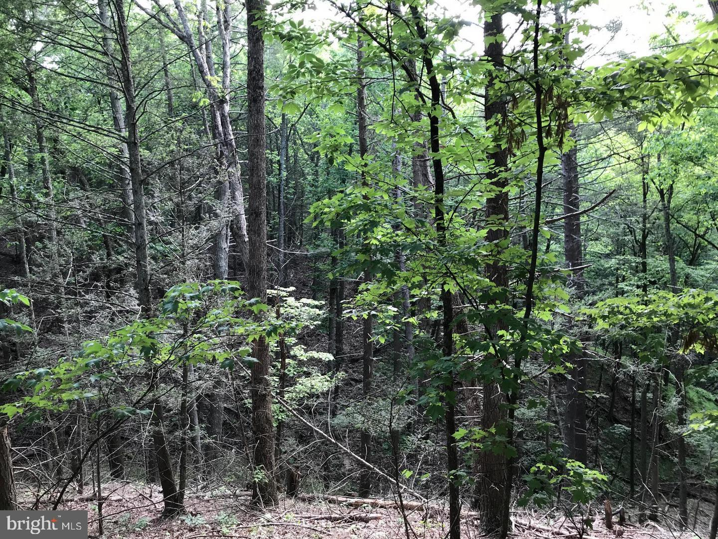 Additional photo for property listing at Daylilly Ln Berkeley Springs, West Virginia 25411 United States