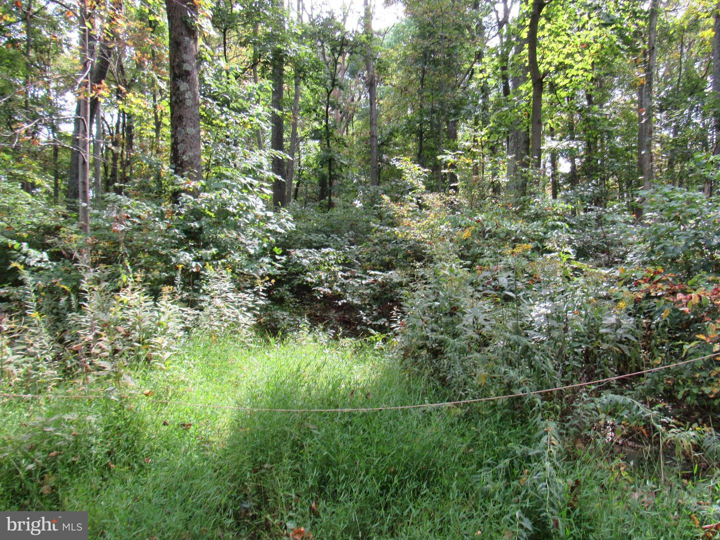 Additional photo for property listing at  Linden, Virginia 22642 États-Unis