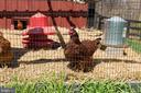 Love Chickens?  Enjoy the chicken coop and run. - 18490 BLUERIDGE MOUNTAIN RD, BLUEMONT