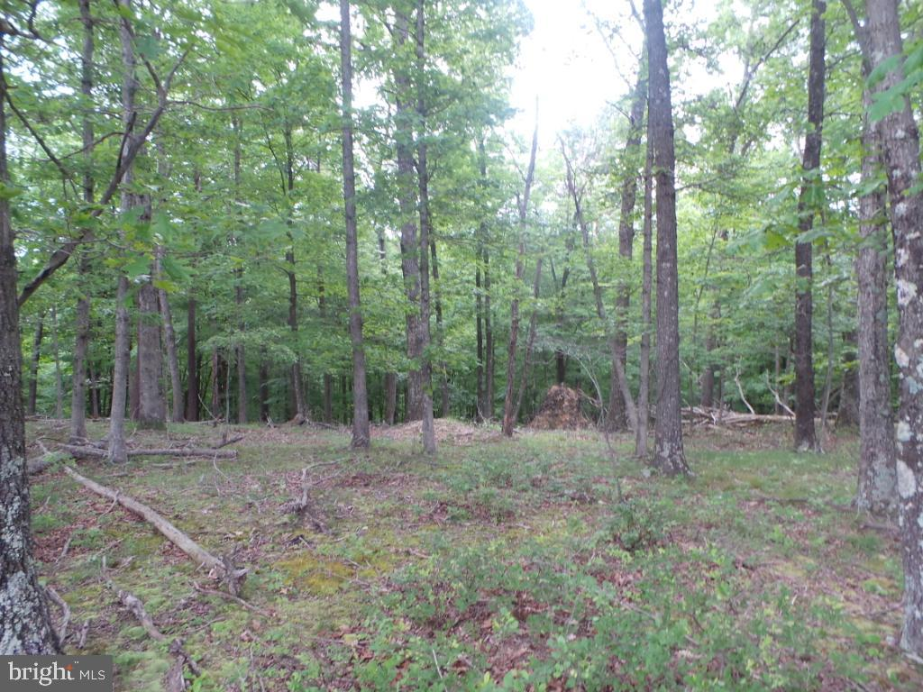 Land for Sale at 49 Plum Tree Lane Berkeley Springs, West Virginia 25411 United States