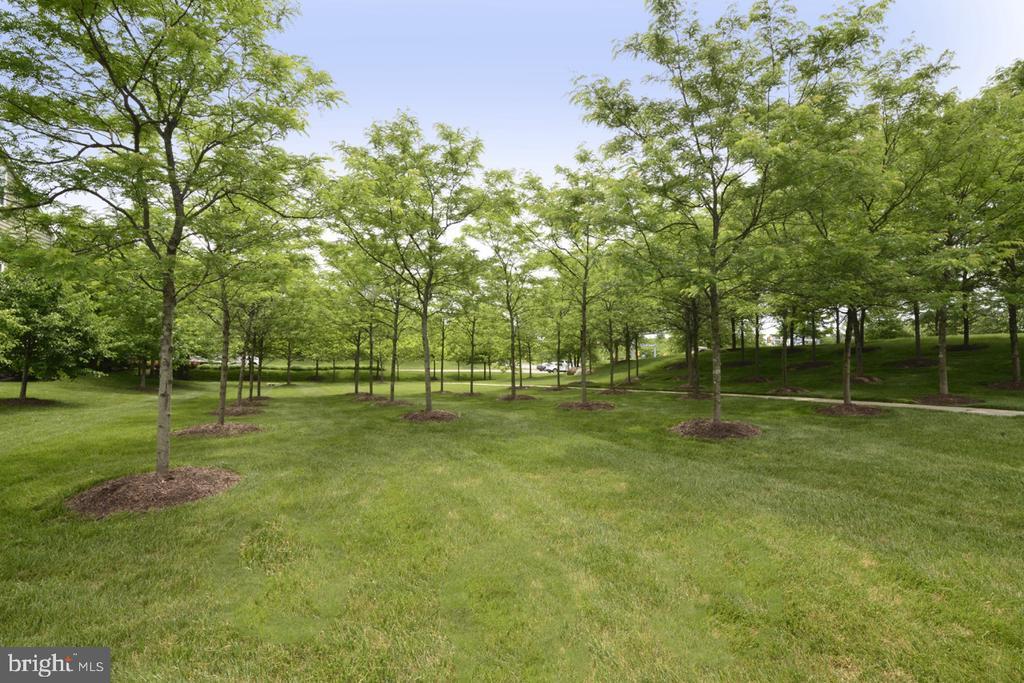 Trees - 23110 BRONSTEIN LN, ASHBURN