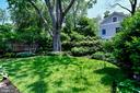 Rear yard with view of beautiful silver maple tree - 4707 47TH ST NW, WASHINGTON