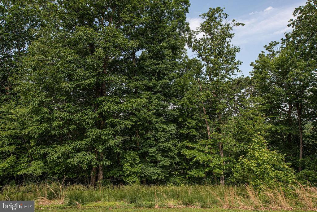 Mature trees surround the property. - 51 RIVER RIDGE LN, FREDERICKSBURG