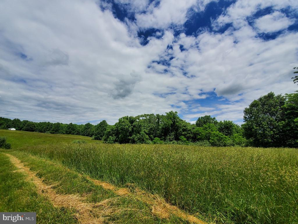 Some of the land to right of drive - 42064 BLACK WALNUT LN, LEESBURG