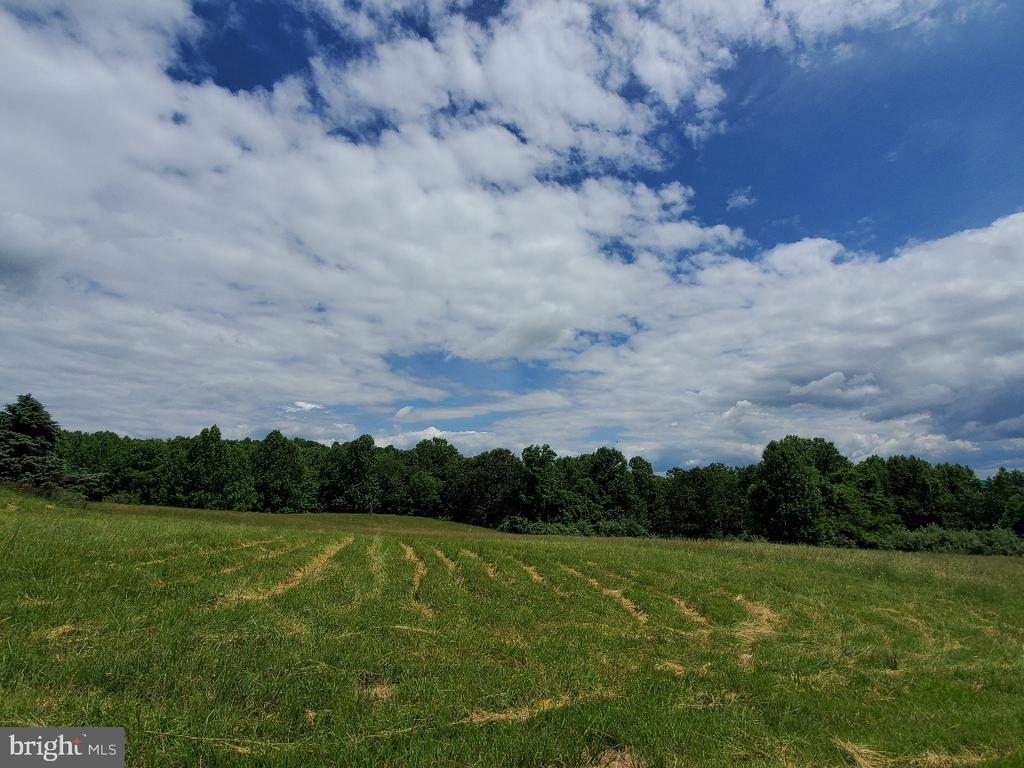 Lot is private and serene, bordered by trees - 42064 BLACK WALNUT LN, LEESBURG
