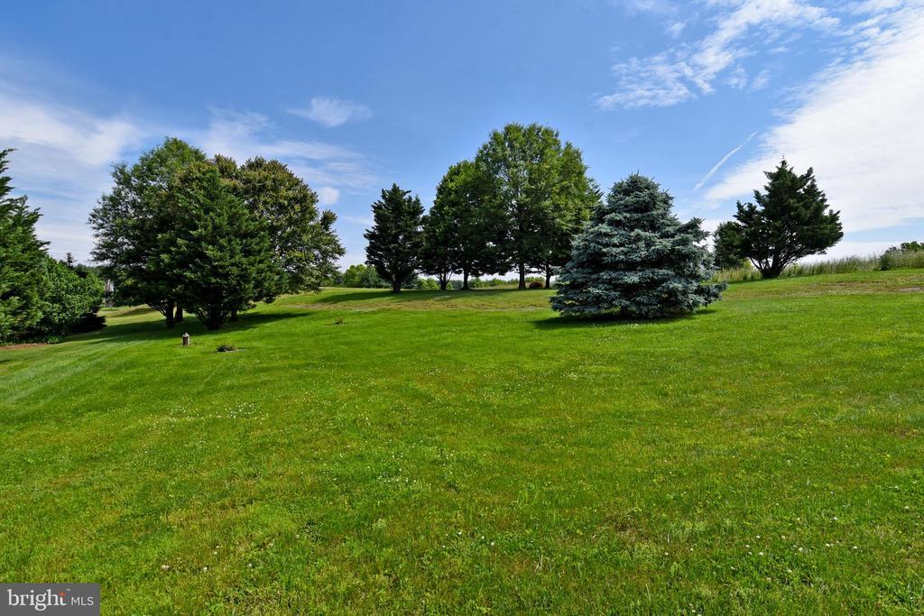 Expansive rear yard in park-like setting - 42324 BIG SPRINGS CT, LEESBURG