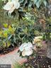 Beautiful landscaping - 12809 SHADOW OAK LN, FAIRFAX