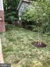 Sod on the side yard with a newly planted tree. - 2320 N VERNON ST, ARLINGTON