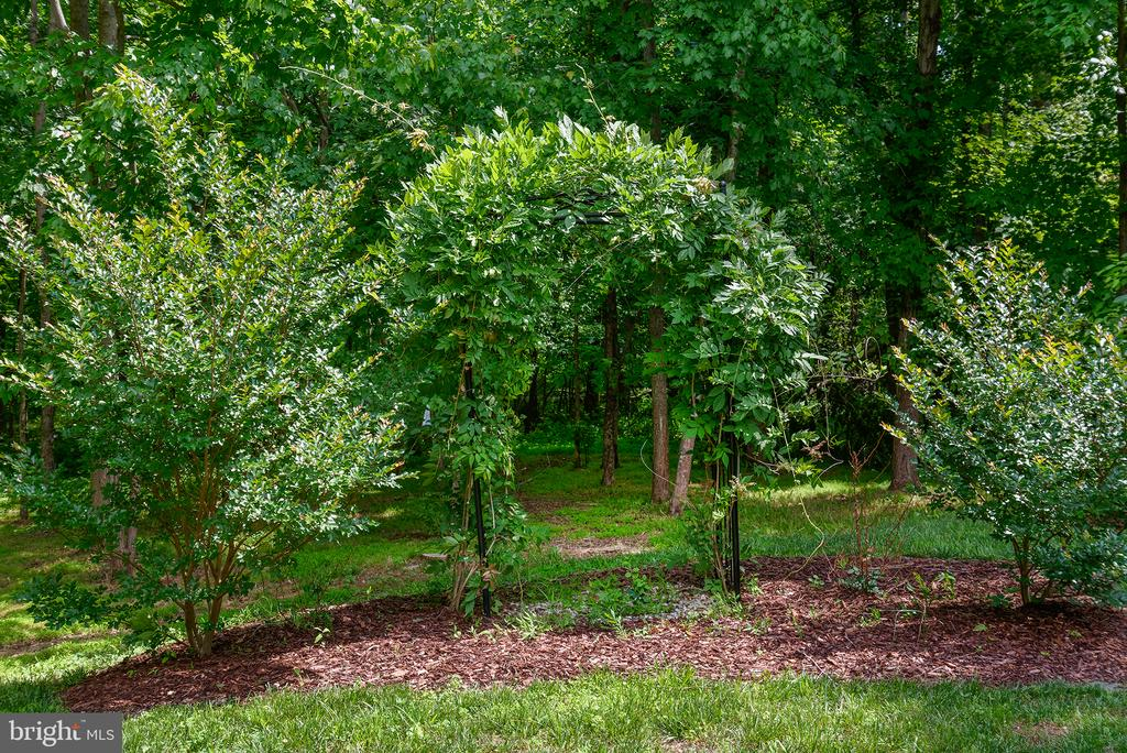 Private wooded parcel with abundant wildlife - 16339 WOODGROVE RD, ROUND HILL