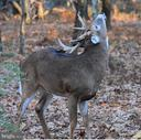 Abundant wildlife - 16339 WOODGROVE RD, ROUND HILL