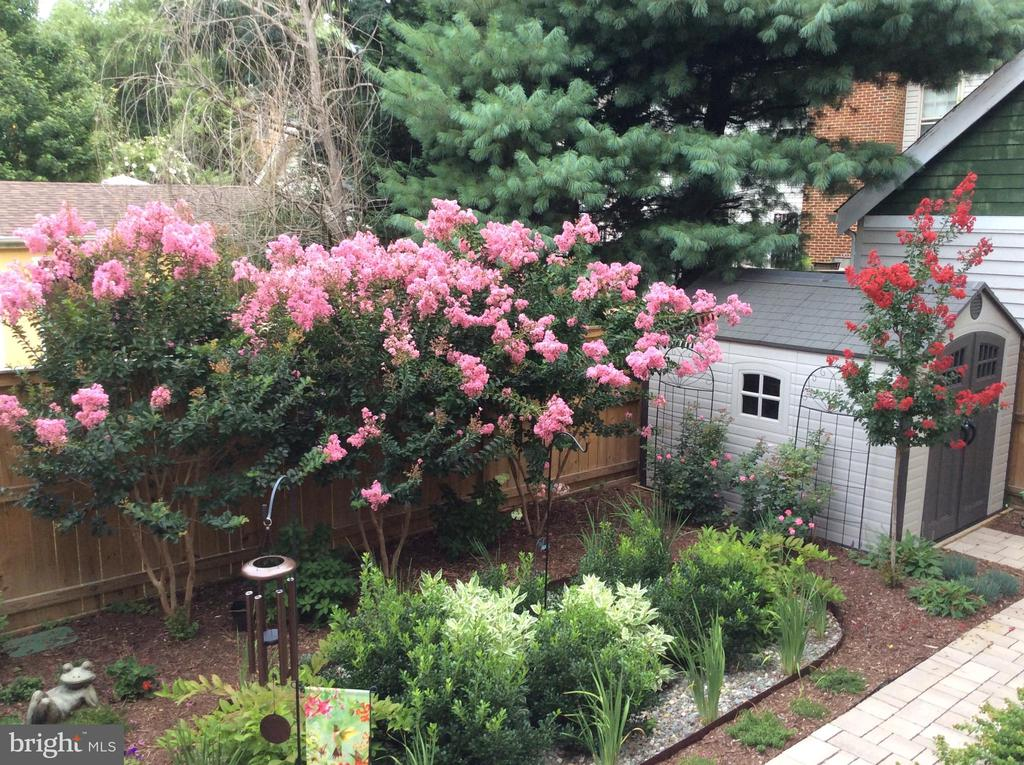 Flowers Blooming in the Summer - 2020 S KENT ST, ARLINGTON
