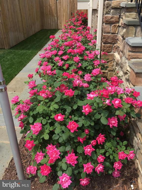 Roses - 2020 S KENT ST, ARLINGTON