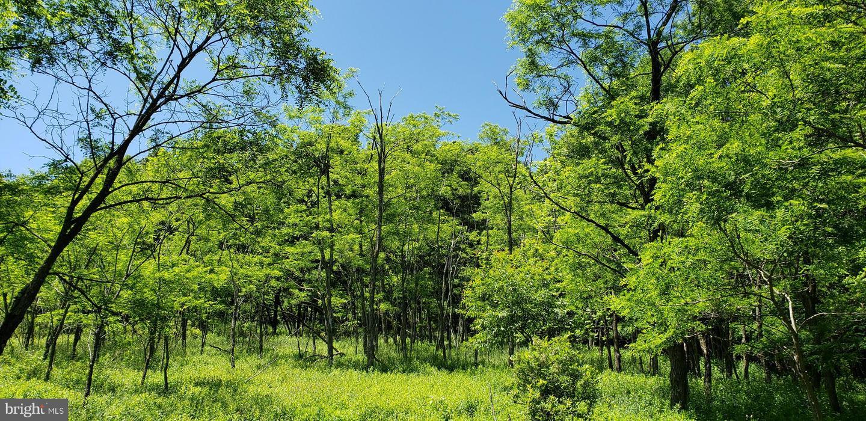 土地 為 出售 在 SEARS LANE #20 Swanton, 馬里蘭州 21561 美國