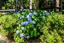 Love the Hydrangeas - 2720 BROOKE RD, STAFFORD