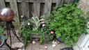 Patio Gardens - 409 GREENBRIER CT #409, FREDERICKSBURG