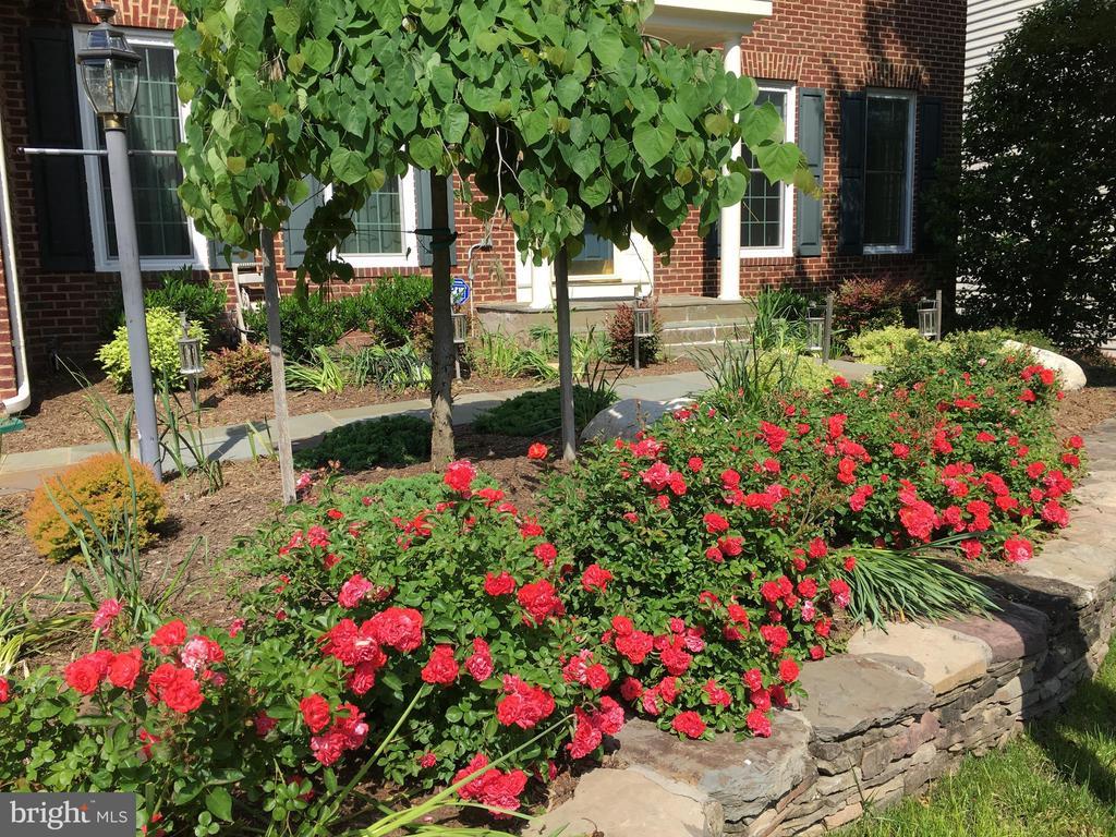 Gorgeous Landscaping! - 20377 WATER VALLEY CT, STERLING
