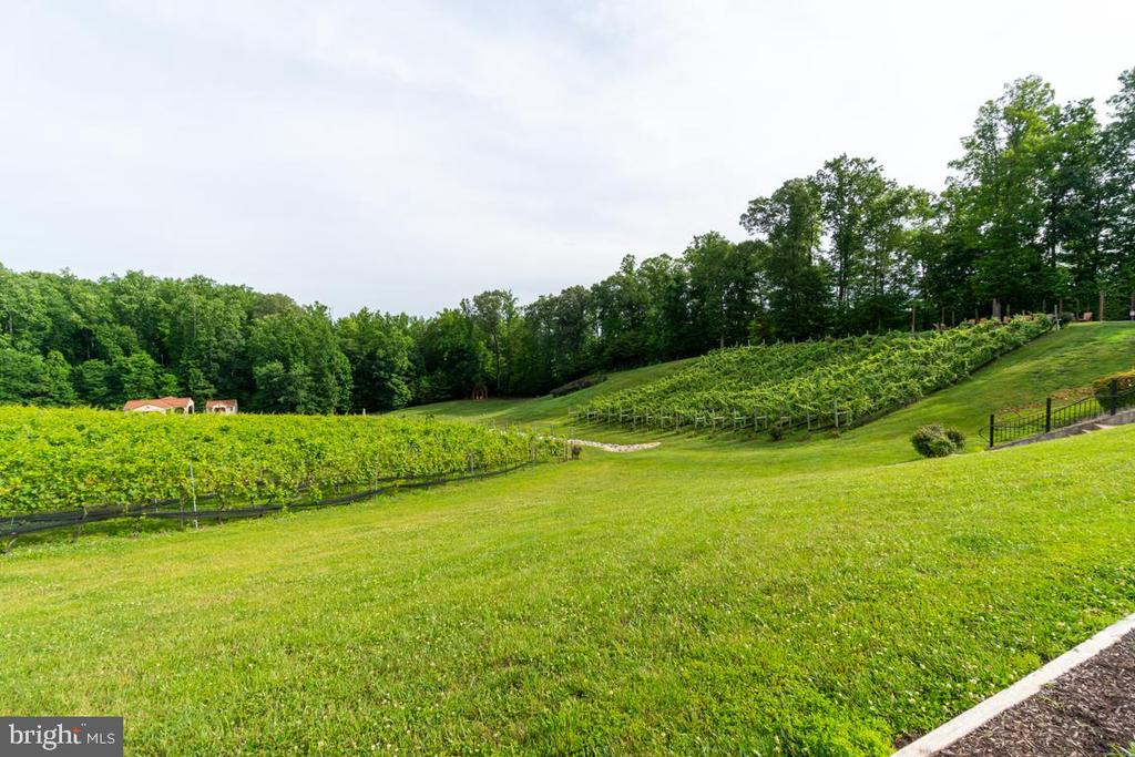 Beautiful vineyards! - 134 WALLER POINT DR, STAFFORD