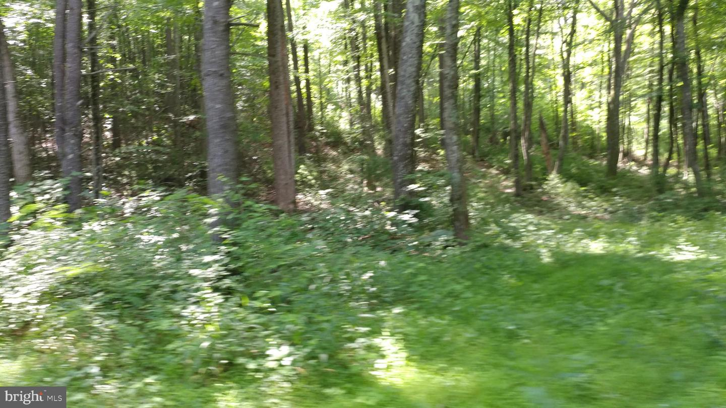 Land for Sale at Printz Mill Road E Luray, Virginia 22835 United States
