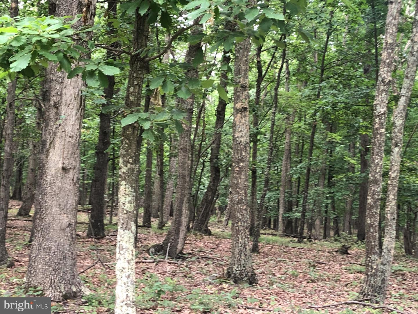 Land for Sale at N Pioneer Ln Augusta, West Virginia 26704 United States
