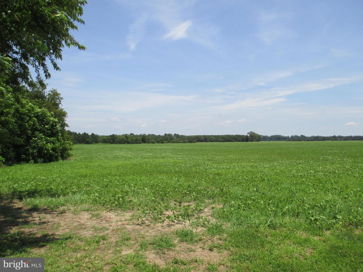 Land for Sale at Bridgeville, Delaware 19933 United States