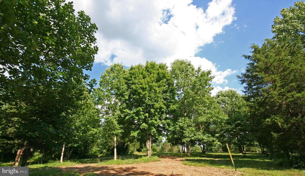 Mature Trees - 8183 PETERS RD, FREDERICK