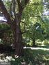 Large old trees abound - 12626 OXON RD, HERNDON