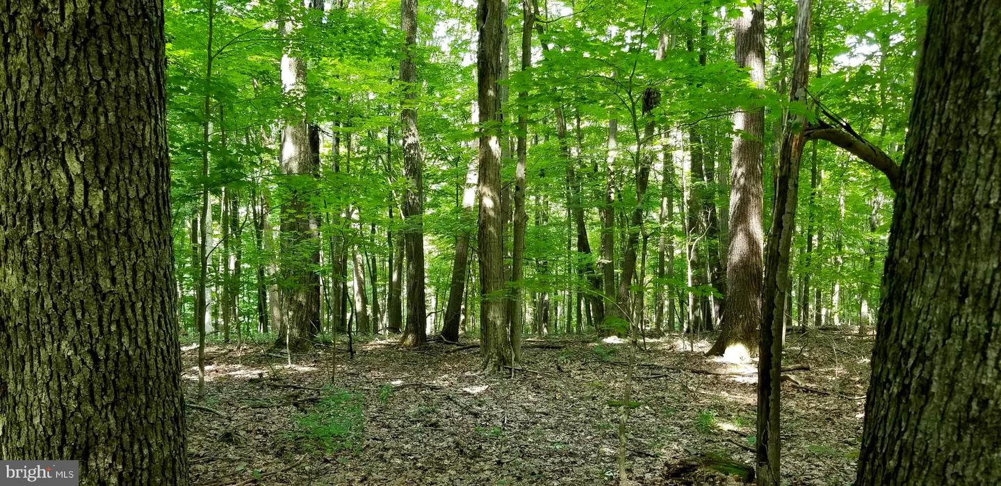 Land for Sale at 224lot-Lot Bear Run Rd 224lot-Lot Bear Run Rd Mc Henry, Maryland 21541 United States