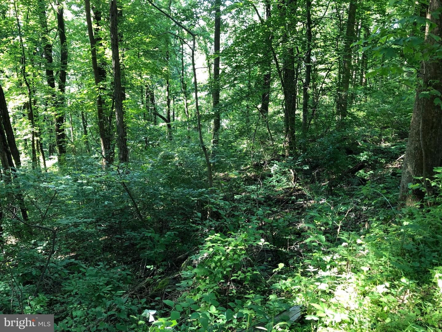 Additional photo for property listing at  Front Royal, Virginia 22630 Amerika Birleşik Devletleri