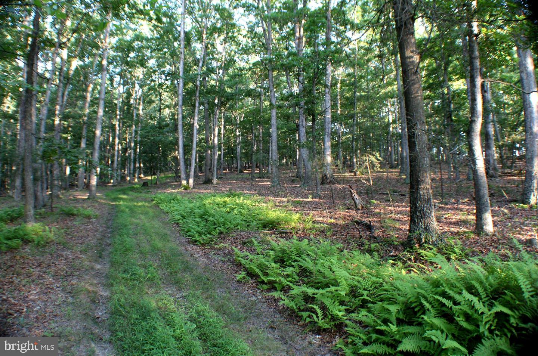 토지 용 매매 에 Moorefield, 웨스트버지니아 26836 미국