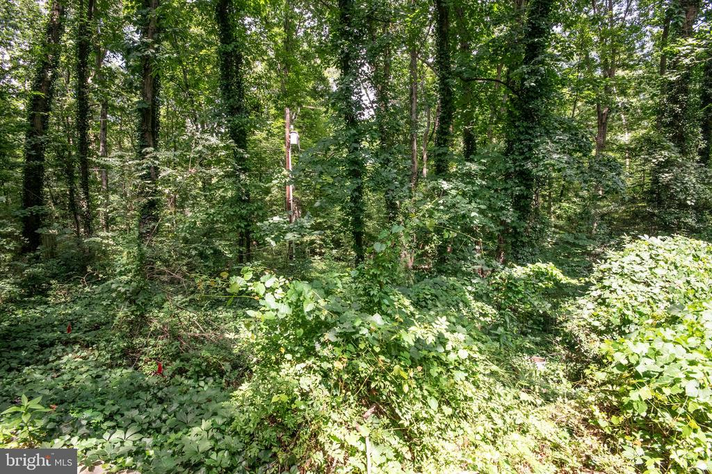 Wooded private landscape - 329 BRAEHEAD DR, FREDERICKSBURG