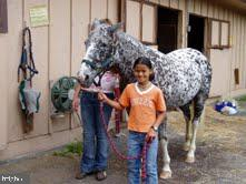 Time with the horses at the stables - 117 MONROE ST, LOCUST GROVE