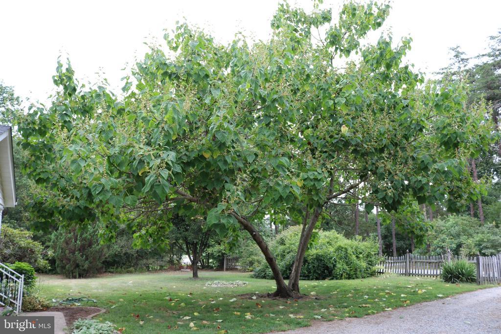 Beautiful Trees! - 11336 WHEELER RD, SPOTSYLVANIA