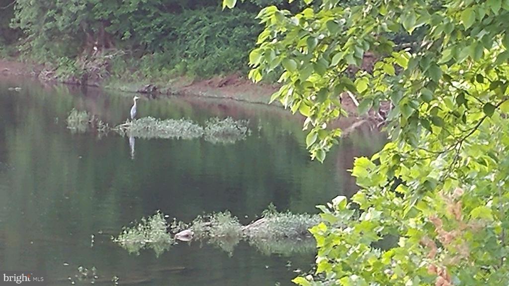 Wildlife! - 9919 MACARTHUR BLVD, BETHESDA