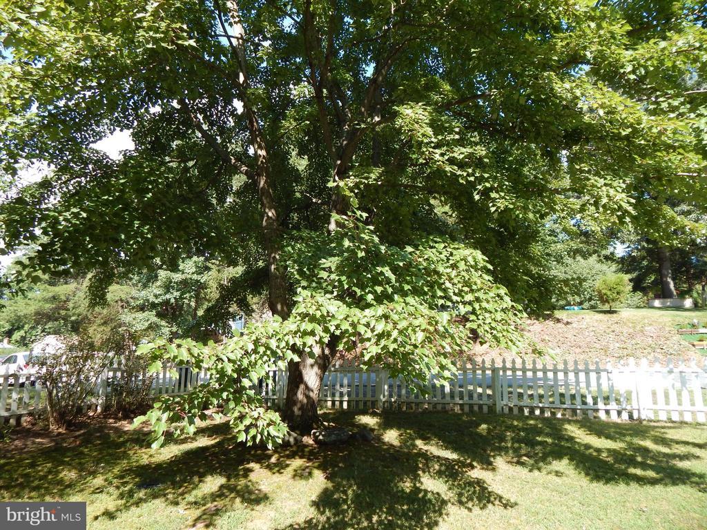 Nice shade tree in front yard - 6200 MASSAPONAX DR, FREDERICKSBURG