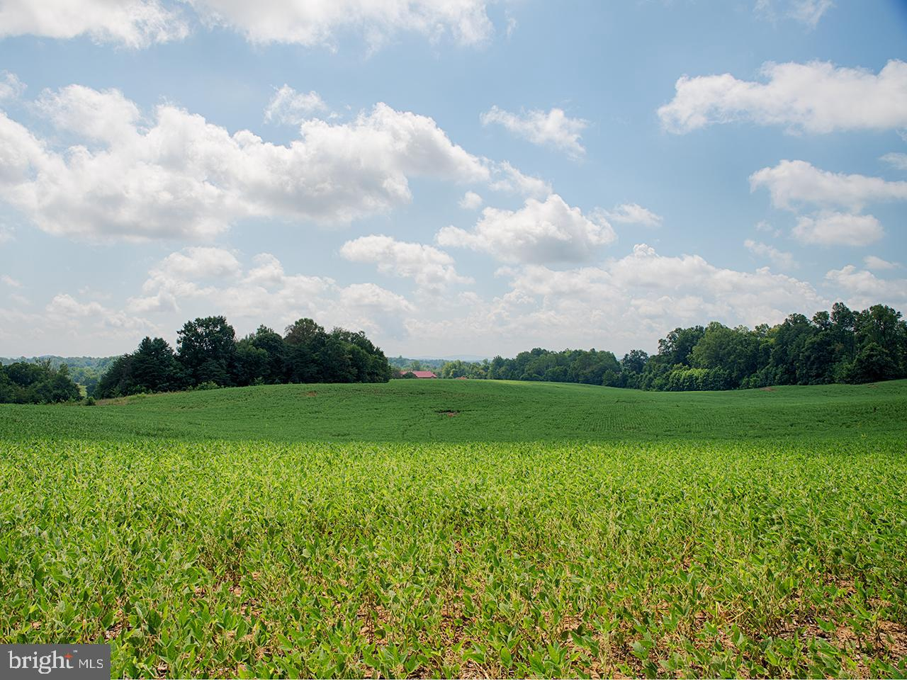 Land for Sale at Madison, Virginia 22727 United States